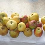 25 pommes de 3 sortes differentes